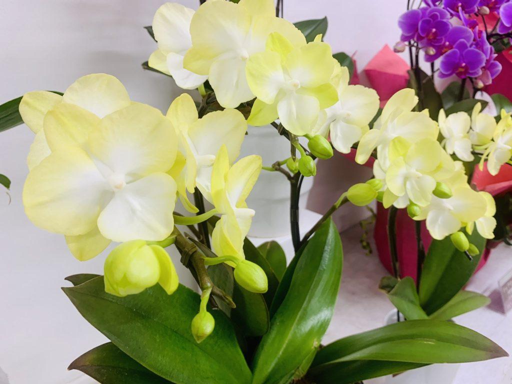 「こういう時こそお花を飾ろう」キャンペーン♫